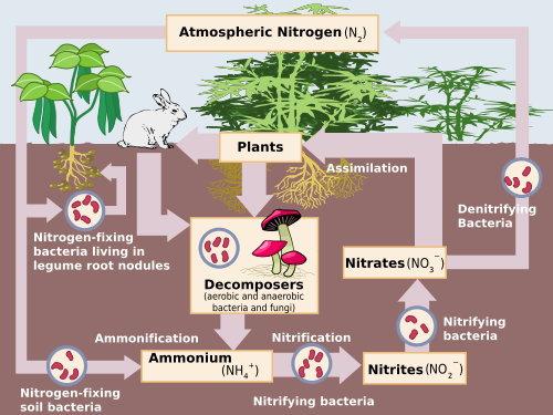 Water Carbon And Nitrogen Cycle Worksheet Answers Quizlet - Worksheets